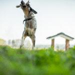 K9 Specialist Training and Rehabilitation Centre - Dog Training Port Macquarie